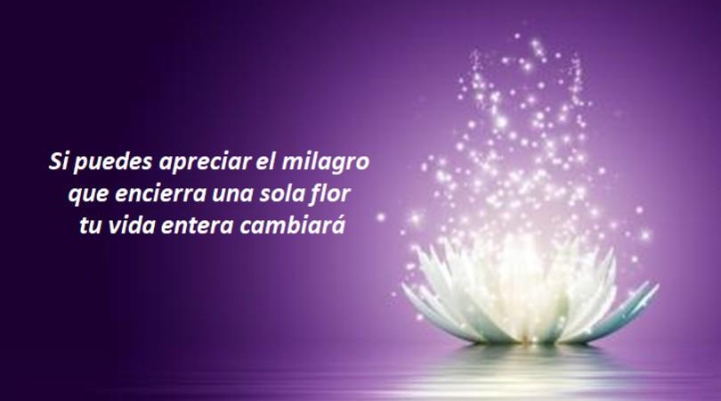 """""""Si puedes apreciar el milagro que encierra una sola flor, tu vida entera cambiará"""""""